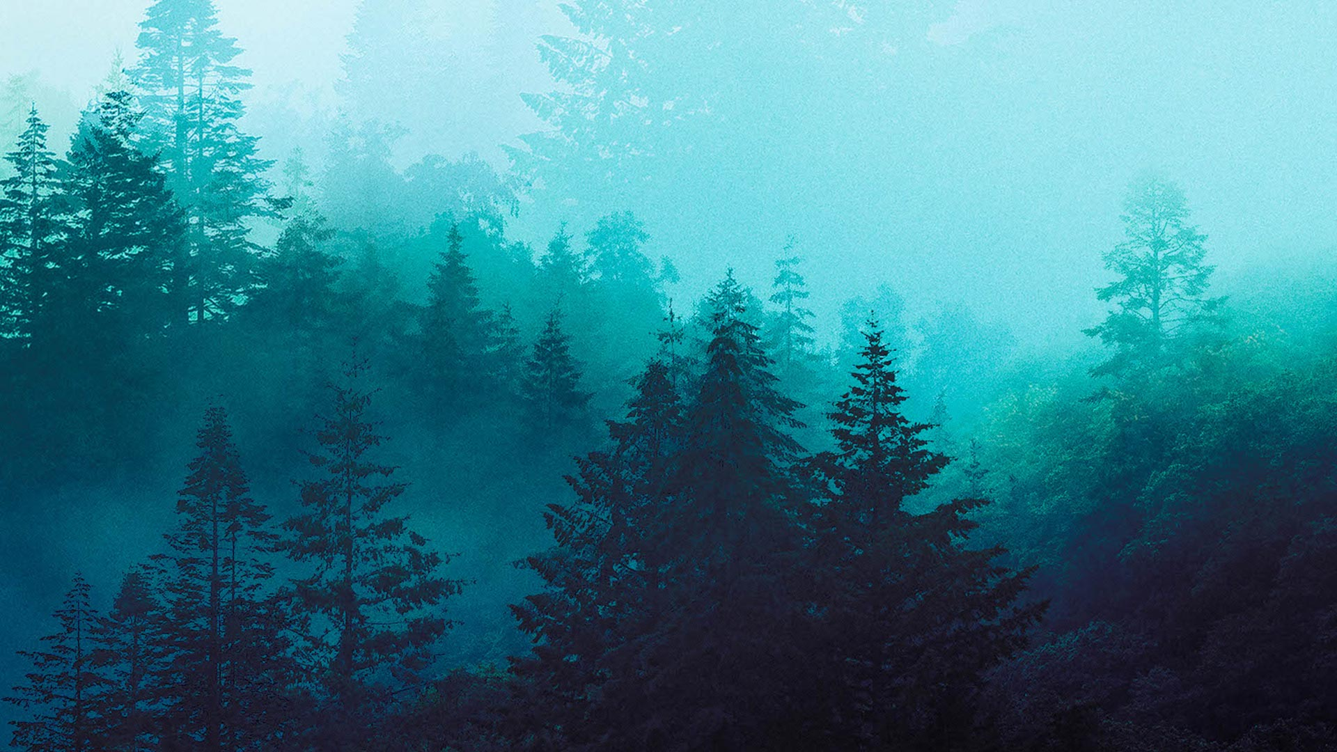Snowdonia Landscapes