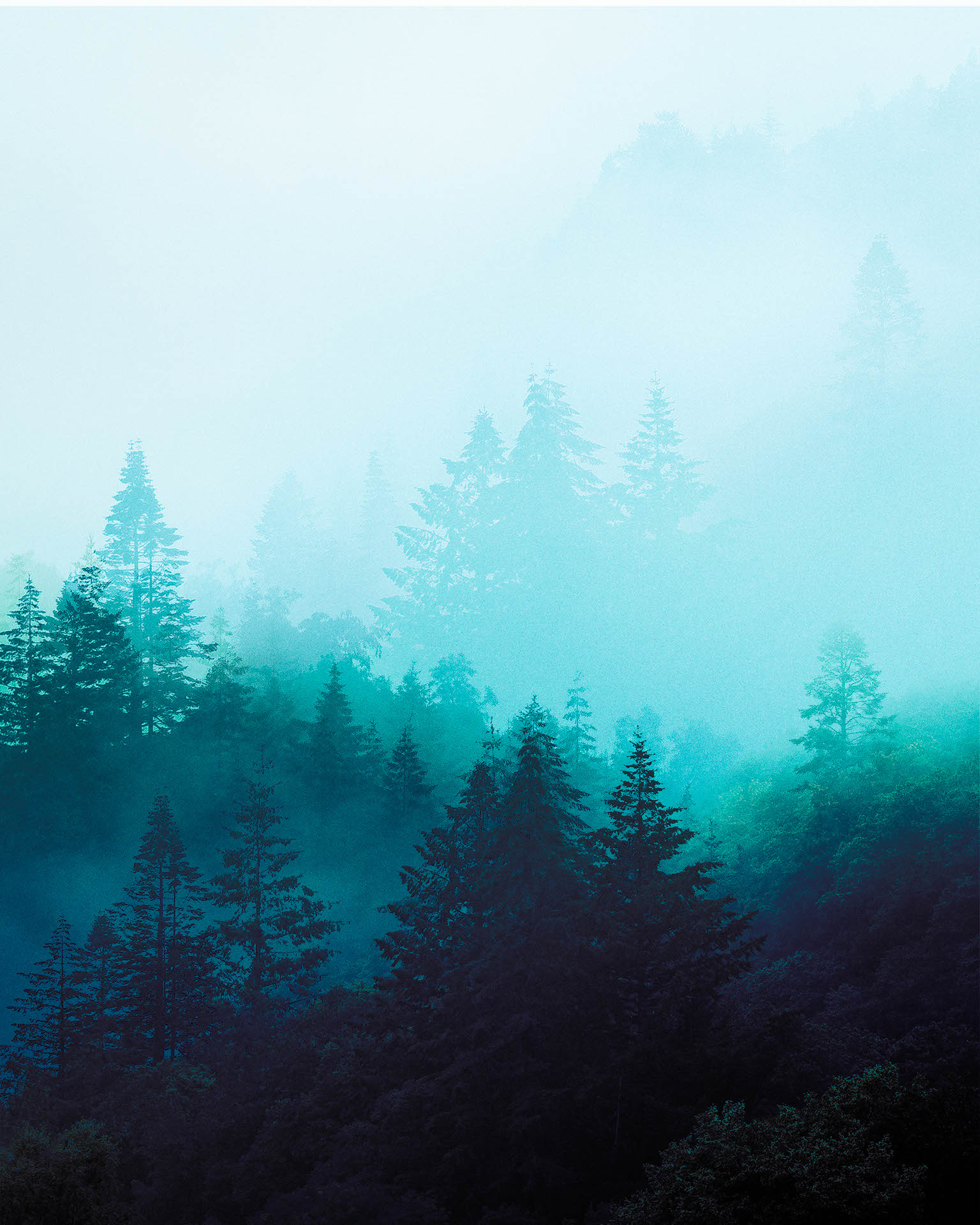 Welsh-Tree-Mist-Stack1920