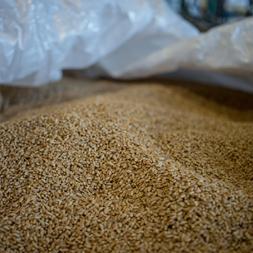 1. Grain
