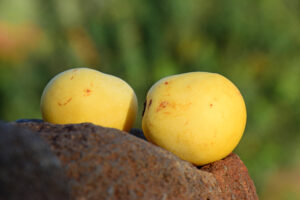 Marula Oil | Why do you need Marula oil for your skin?
