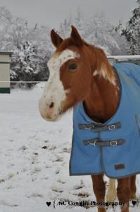 Paint Horse Te