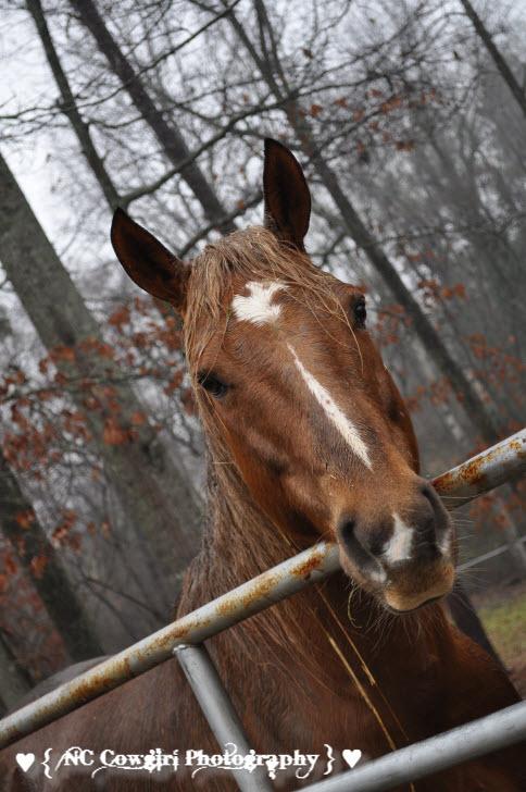 Wet Horse - Spur