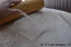 Horse Shedding Hair