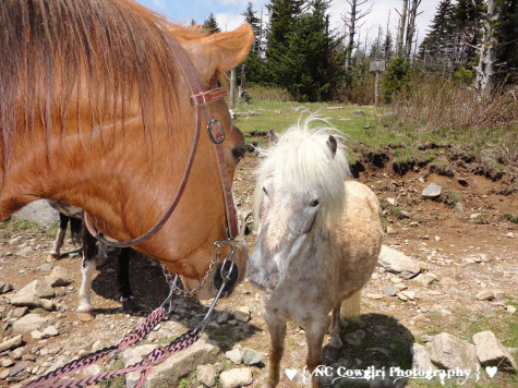Dooey and Wild Pony