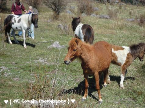 Wild Ponies of Mt Rogers
