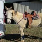 Barrel Horse Vinni