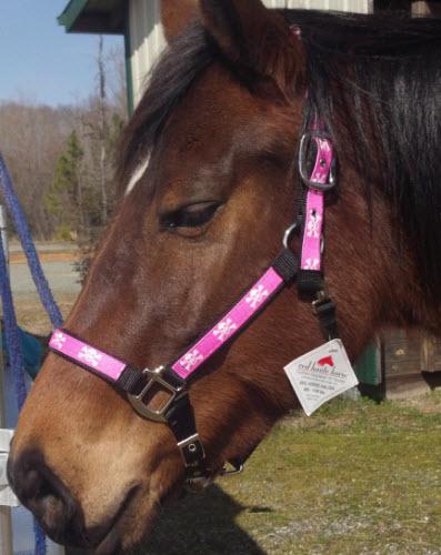 Horse Designer Halter from Red Haute Horse