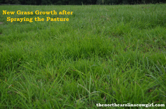 Horse Pasture Growing New Grass