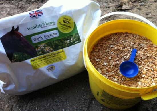 garlic supplement for horses2
