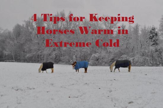 Keep Horses Warm in Winter