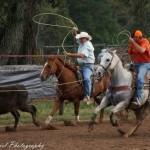 Cowboys Roping