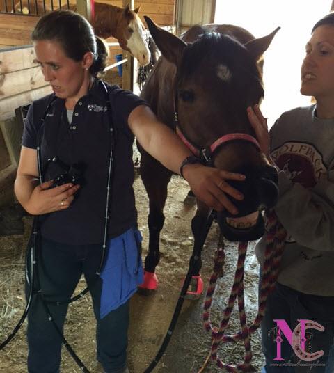 Vet Scoping Horse