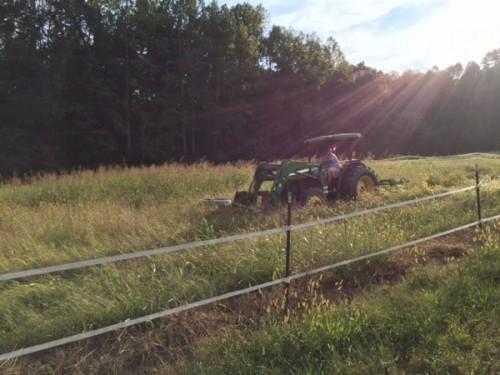 wicking pasture