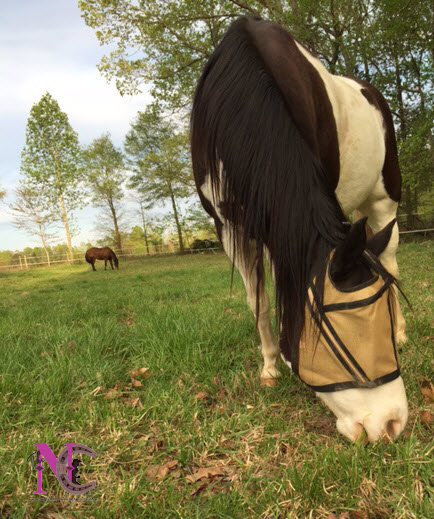 Noble Outfitter's Guardsman Fly Mask for Horses