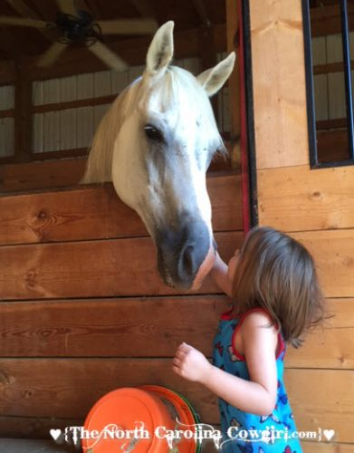 little girl and horse