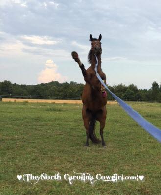 horse rearing
