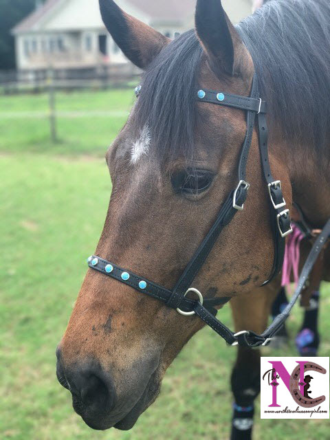 Two Horse Tack bitless bridle