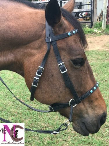 Two Horse Tack 5