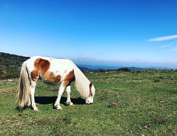 wild pony in the mountains