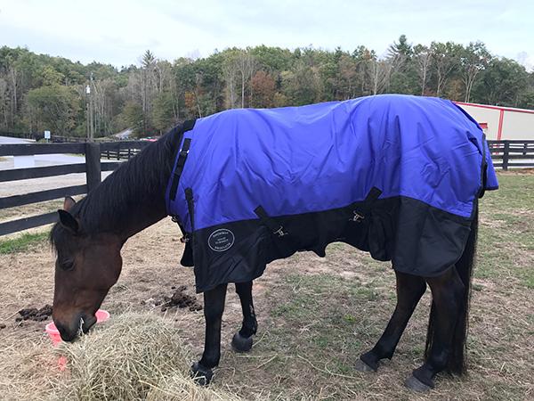 Showman Horse Blanket