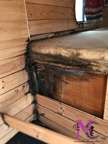 Mold Growing in Horse Trailer