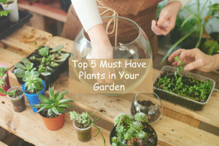 Top 5 Minimalist Plants to Have in Your Garden to Boost Your Mood & Health