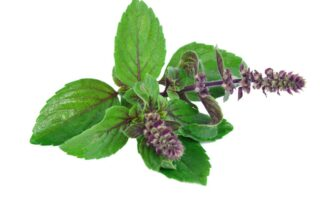 How to Keep Mind Fresh and Calm with Tulsi Leaves