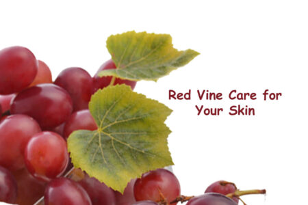 Let Your Skin Enjoy the Goodness of Red Vine - Red Vine Face Wash, Face Cream, Face Toner, Face Mask