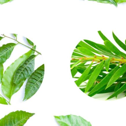 Difference Between Neem Face wash & Tea Tree Face Wash