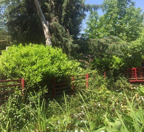 Nezahat Gökyiğit Botanic Garden