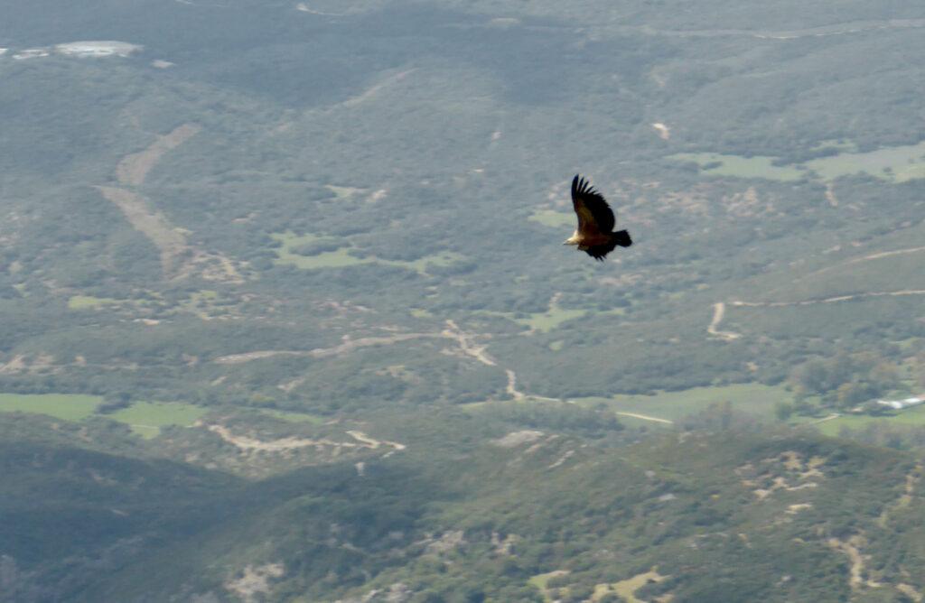 De gieren vanaf de Picacho del Aljibe