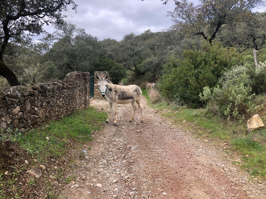 Ezels op de weg
