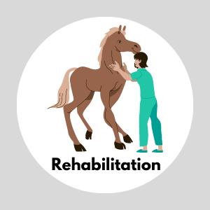 Rehabilitation (Mobile View)