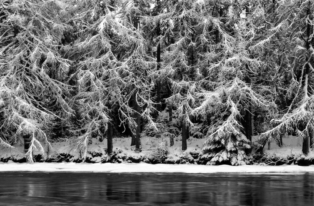 17 - Ansel's Trees.jpg