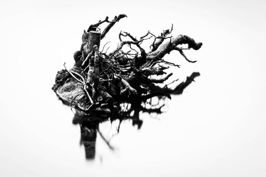 27 - Tay Tree.jpg