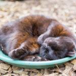 Paula Sparkes Cat 18