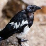 Paula Sparkes bird
