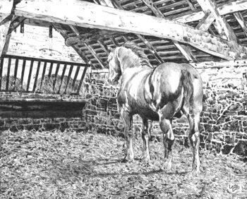 The Suffolk Punch Stallion