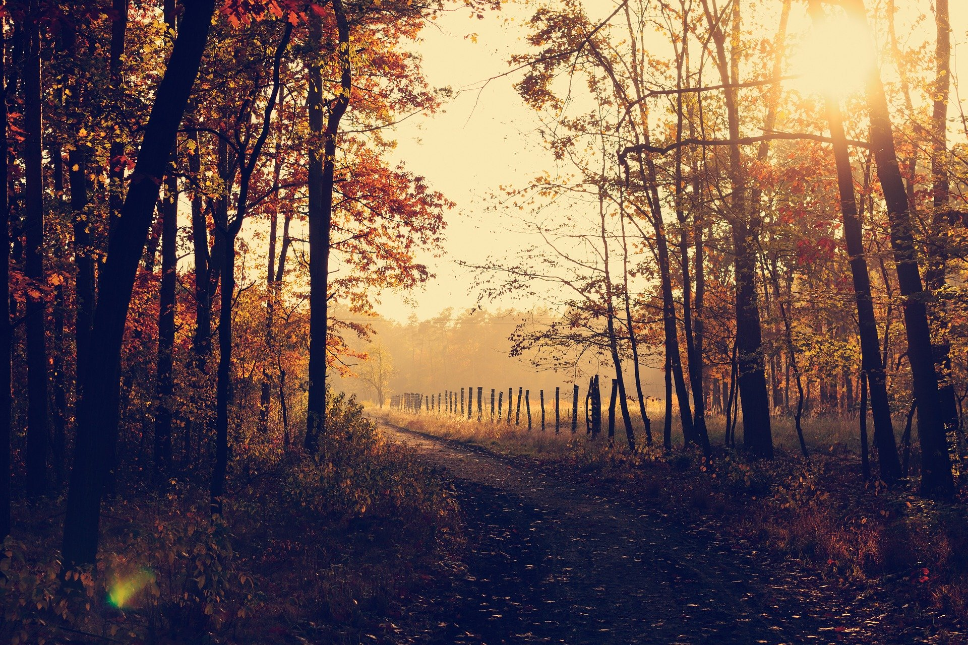 Sunset woodland