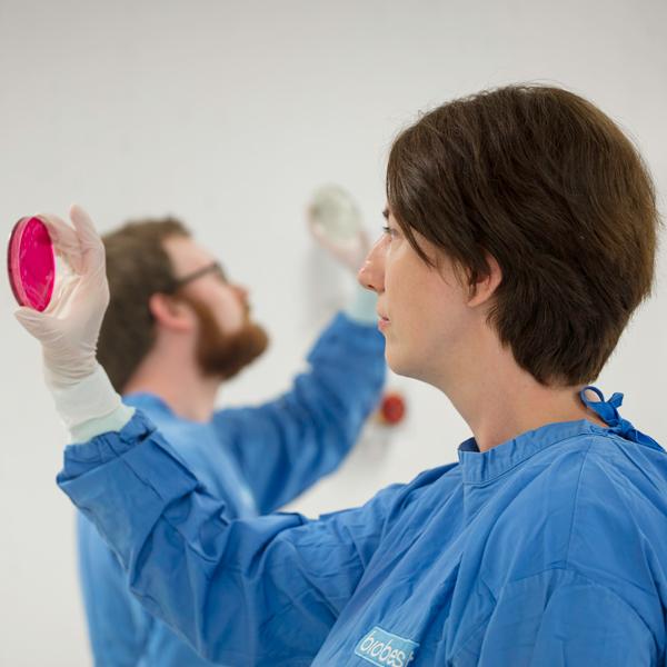Scientists examining plates