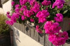 Blumen-Sommer