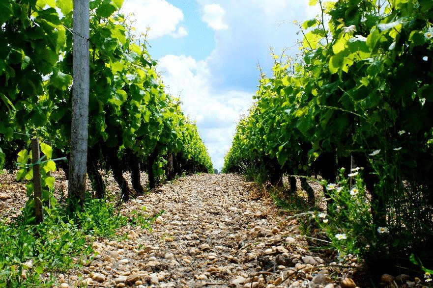 Descubre las Viñas chateau Sigales Rabaud