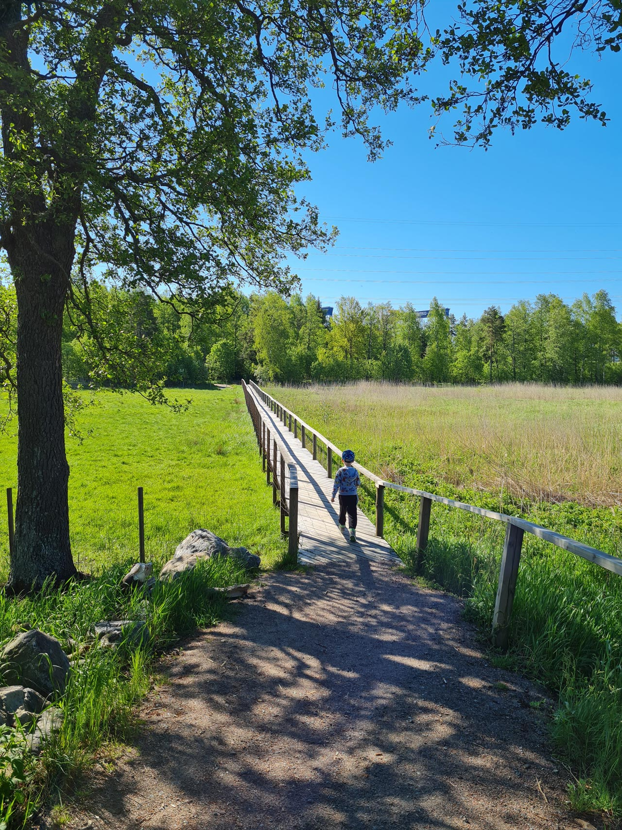 Armi Sarajärvi: Lintutornin polku