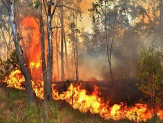 مارگلہ کی آگ کا منظر