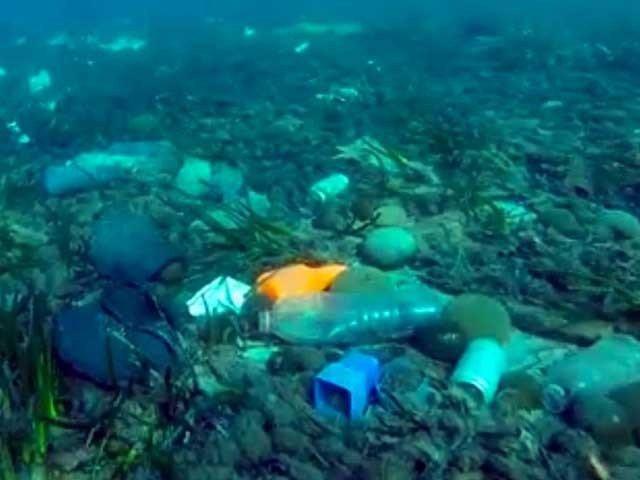 آلودگی، سمندری