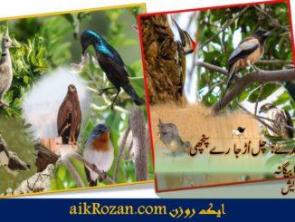 ملیر کے پرندے