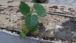 Leaffightingforlifebyyasserchattha
