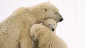 Wallpapersxl Animal Mother Animals Bear Love Hd P Resolution 1020027 1920x1080