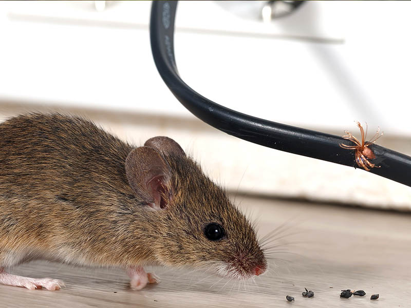 DSY Pest Control Derbyshire South Yorkshire HP Content Services Image JPG 010