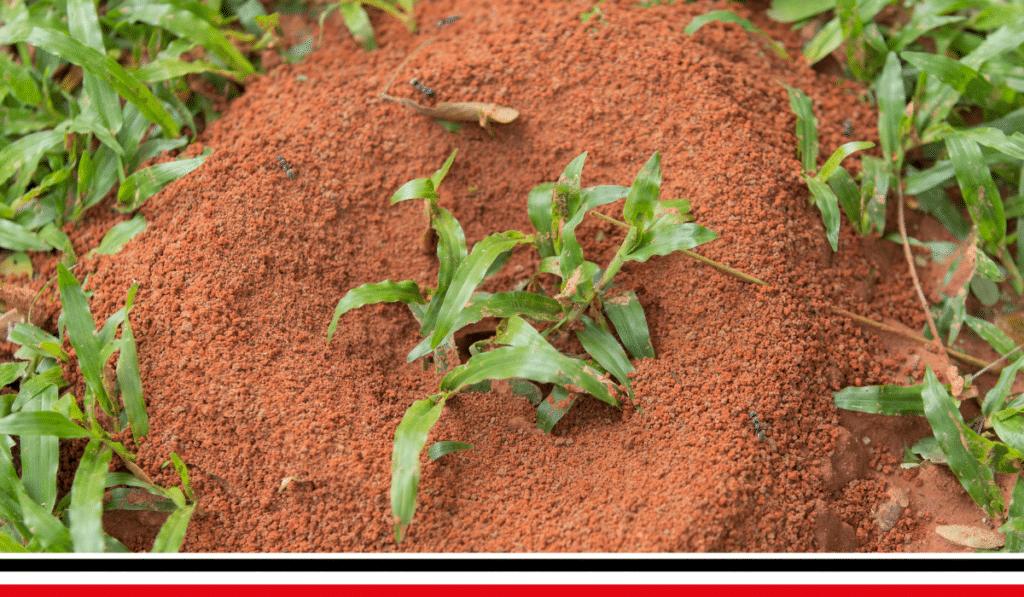 Ants nest in a Chesterfield garden